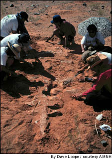 Sand Slides Create Dino-Fossil Trove