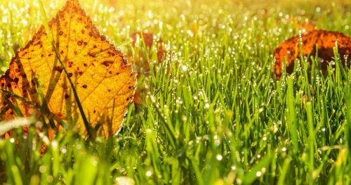 Top Lawn Care Tips