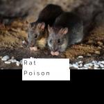 Top 6 Rat Poison
