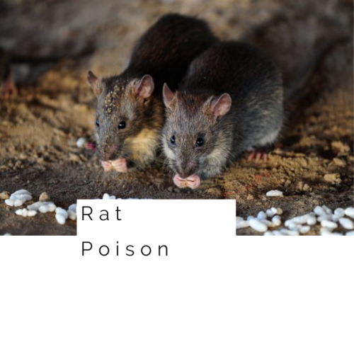Top 6 Rat Poison
